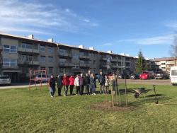 KÜ Alu-Pargi Esimene (Alu alevik, Raplamaa) istutas Eesti Vabariigi 100. sünnipäevaks oma ühistu tamme 2018. aasta aprillis.