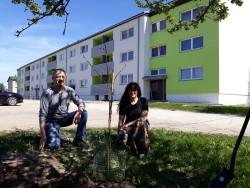 KÜ Sügise 4 Arukülas istutas Eesti Vabariigi 100. sünnipäevaks oma ühistule kaks punast tamme 12.05.18.