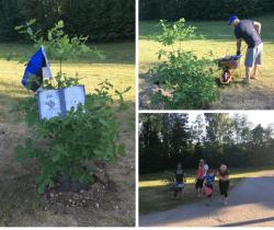 KÜ Purila tee 5 (Hagudi, Raplamaa) istutas Eesti Vabariigi 100. sünnipäevaks oma ühistu tamme 1.06.18.